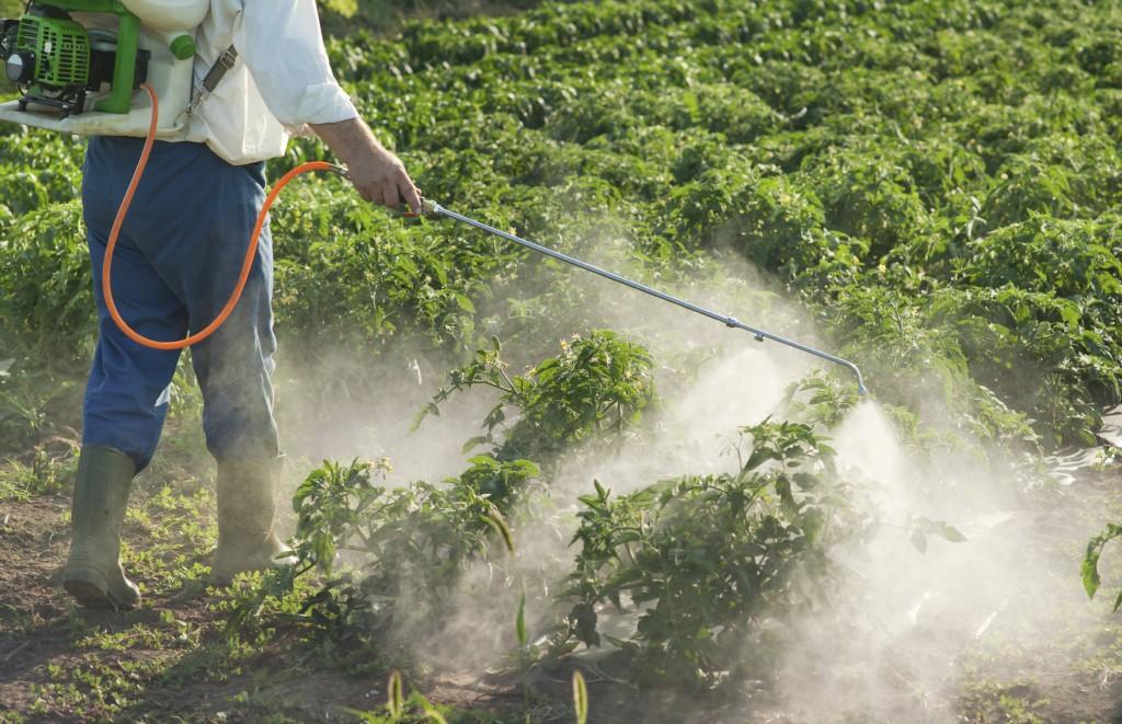 Man spraying vegetables in the garden