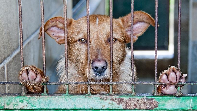 Карантин по бешенству животных установили в Сергиево‑Посадском районе