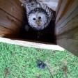 В искусственных гнездах вывелись птенцы редких птиц