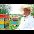 Владимир Чеканов: «Не пытайтесь сами прогнать рой – покусают пчёлы»