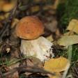 Женщина травмировала ногу в подмосковном лесу, засмотревшись на поляну грибов