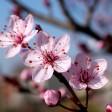 Вишню, яблони и бархатцы покупали на ярмарке «Сад-Огород» в Сергиевом Посаде