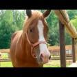 Золотые лошади Павла Мощалкова