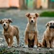 Введены штрафы за отстрел бездомных животных