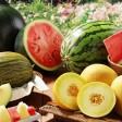 Продажа бахчевых стартует в Подмосковье 1 августа