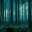 13 часов блуждали по ночному лесу грибники