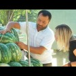 Как выбрать арбуз и дыню