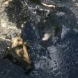 Собак, тонувших в луже мазута, спасли под Сергиевым Посадом