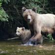 Жителям Подмосковья рассказали, как избежать встречи с медведем в лесу