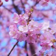 День японской культуры пройдет в библиотеках