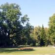 Абрамцевский дуб стал деревом года