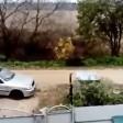 Жители деревни около Сергиева Посада боятся выйти на улицу из-за диких кабанов