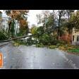 Упавшее дерево убрали за 20 минут