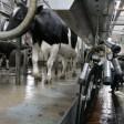 «Молочные реки» получат поддержку из области