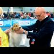 Шелти – маленькая собака большой красоты