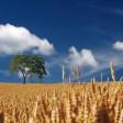 35 гектаров земли в Сергиево-Посадском районе сданы в аренду