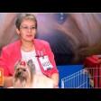 Русская салонная – собака голубых кровей