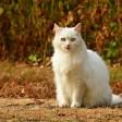 Суд вынес приговор пенсионеру, убившему кошку
