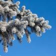 Арктическое вторжение: в Подмосковье похолодает