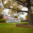 Абрамцевский дуб лидирует в голосовании на международном конкурсе «Европейское дерево года – 2019»