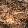 Как уничтожить короеда в деревянном доме