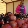 Социальная ярмарка «Ценопад» открылась в Сегиевом Посаде