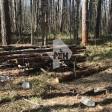 Нашли скелет экстремала, ранее приковавшего в лесу около Сергиева Посада