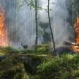 Первые лесные пожары зафиксированы в Подмосковье