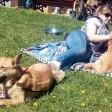 Собаки искали друзей среди людей