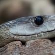Экологи рассказали, каких змей можно встретить в Московской области