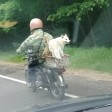 Собака-байкер и ее хозяин, пенсионер, стали героями подмосковных дорог