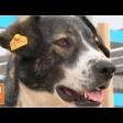 Бездомные собаки: от приюта к пристройству