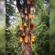 «Общежитие» для птиц организовали в парке Сергиева Посада