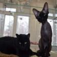 Отель для кошек в Москве - комфорт и безопасность вашего четвероногого друга