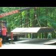 Экстремалов переводят из-под ЛЭП под кроны деревьев