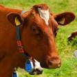 Начинающие фермерские хозяйства могут получить господдержку в виде грантов