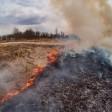 12 очагов лесных пожаров ликвидировали в Сергиево-Посадском городском округе за два месяца