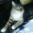 «Пошли котик, тебе пора умирать». Подростки вырывали зубы коту пассатижами