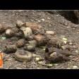 Склад корпусов от боеприпасов обнаружили под Краснозаводском