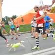 Более 2600 человек примут участие в легкоатлетическом забеге «Сергиевым путем» 20 июля