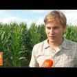 Растущее стадо в «Кузьминском» требует больше кормов