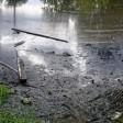 В Сергиевом Посаде обещают реанимировать пруд, который превратился в сточную канаву с дохлой рыбой