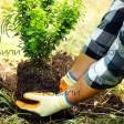 Можно ли сажать деревья осенью? Плюсы и минусы.