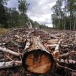 За вырубку деревьев грозит штраф