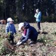 Школьники, учителя, воспитатели поддержали акцию «Наш лес. Посади своё дерево»