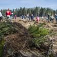 Сергиевопосадцев приглашают принять участие в акции «Наш лес. Посади свое дерево»