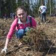 Сергиевопосадские школьники поддержат акцию «Наш лес. Посади свое дерево»