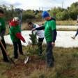 Сосны сажают возле новостроек в Сергиевом Посаде в рамках акции «Наш лес. Посади свое дерево»