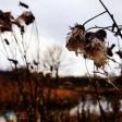 Погода на Покров покажет, какой будет предстоящая зима