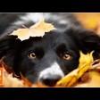 Вакцинация домашних животных от бешенства – бесплатно